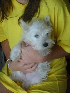 Angus baby